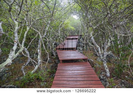 Wooden path for tourists in downtown turtle reproduction Isla San Cristobal Galapagos