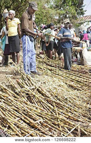FOND BAPTISTE, HAITI - FEBRUARY 29, 2016:  An unidentified man stripping stalks of sugarcane at a village market.