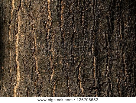 Dry Tree Bark Texture Background, Closeup