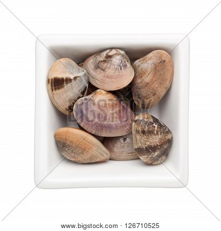 Clams in a square bowl isolated on white background