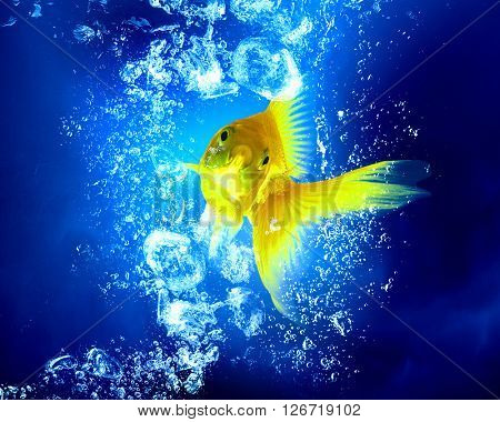 Gold fish in water