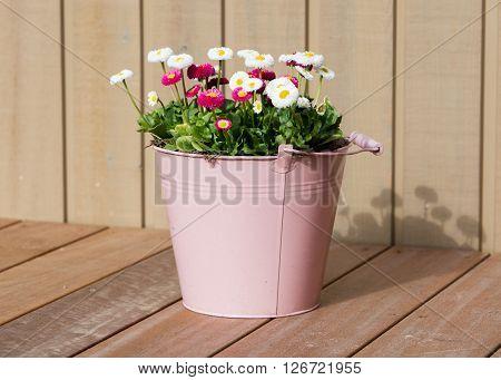 Bouquet Of Daisy Flowers In A Bucket
