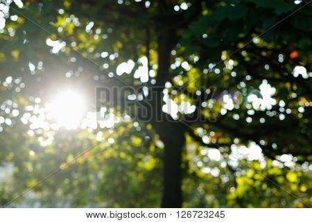 Sunlight Through Leaves On Tree, Image Blur Bokeh Background