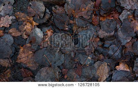 decay leaves on dark wet asphalt after rain as background
