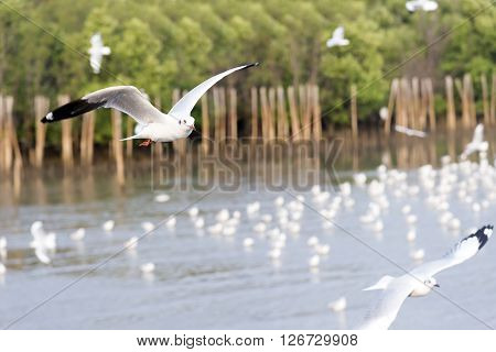 the seagull flying at the sea with group of seagulls is background