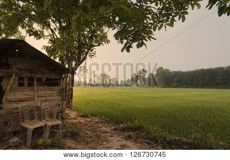 Old Traditional Rice Field Bamboo Hut. Agriculture And Farming Landscapes With Dramatic Sky And Clou