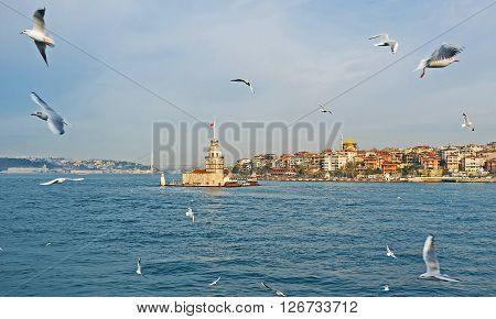 The Maiden's Tower and many flying gulls Istanbul Turkey.
