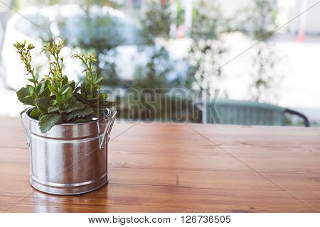 Green tree or plant in silver metal pots on wooden table. Background is copy space