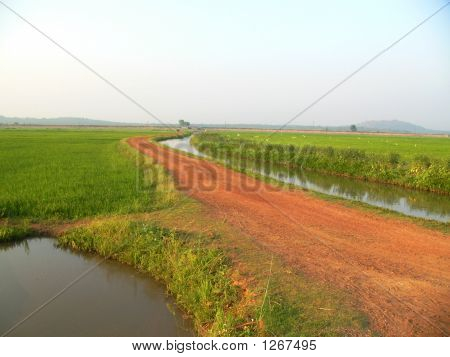 Paddy Farmlands