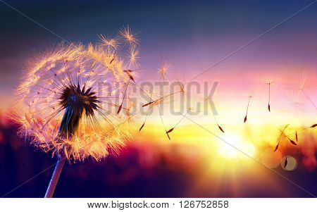 A Dandelion To Sunset, Freedom to Wish