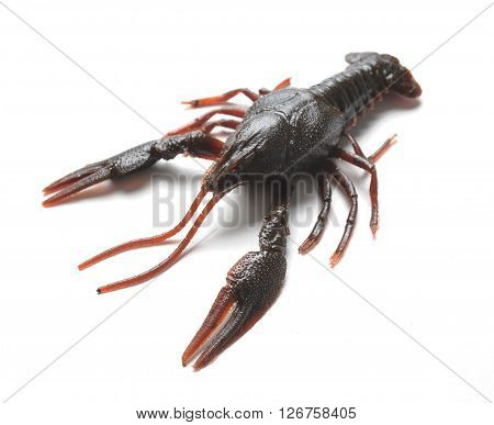 Fishing silicone lure black crayfish at white background