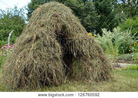 Hay crop as in earlier times - closeup