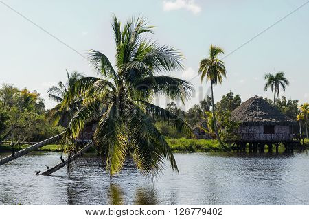Houses over pillars with palm tree growing from water at a Black lake in the Cuban village of Guama, Cuba