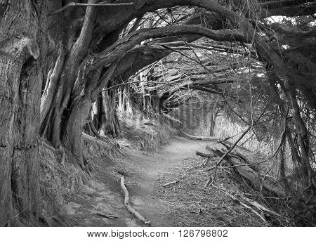 The mystic looking path Hollow Alley outside Akaroa resort town (New Zealand).