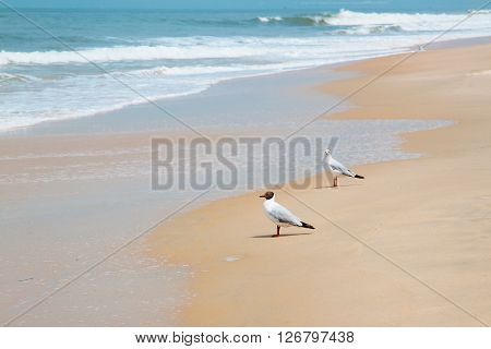 India - GOA landscape with sea, waves and birds