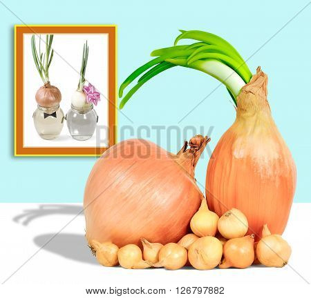 seedlings grown onions and the onion family with children in the background of photos friendship love longevity