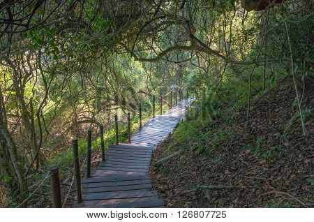 STORMS RIVER MOUTH SOUTH AFRICA - FEBRUARY 28 2016: Shaded boardwalk from the restaurant to the mouth of the Storms River a 30 minutes walk