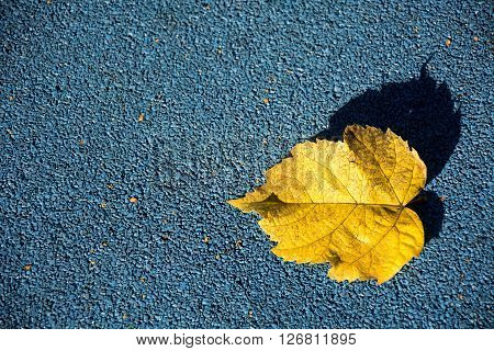 A elegant photo of a yellow leave with sunlight and blue ground