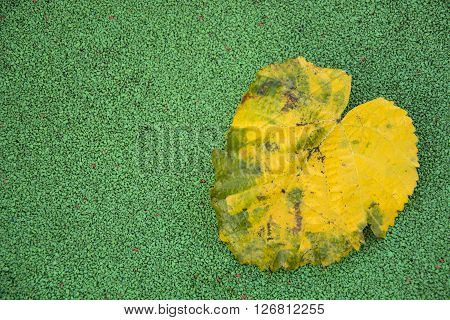 A elegant photo of a yellow leave with sunlight and green ground