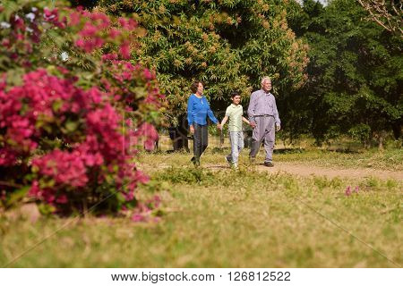 Grandparents enjoying their retirement: Senior woman and old man spending time with their grandson in park. The old people hold the boy's hand and take a walk outdoors