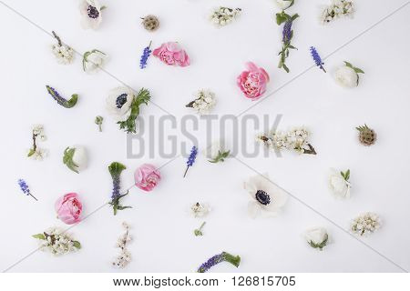 Heads of flowers : white anemones; pink tulips; white buttercups; violet veronica; blossom plum grape hyacinths on white background from the top