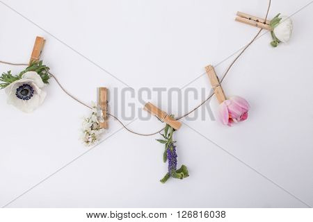 Flowers like: buttercup grape hyacinth tulip veronica blossom plum on clips ith white background