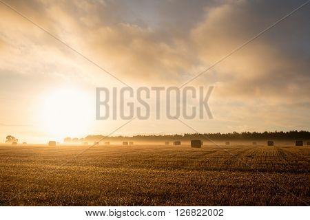Rising sunshine over fields