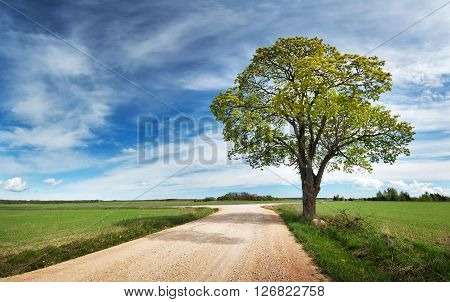 Beautiful lonely tree in spring near gravel road