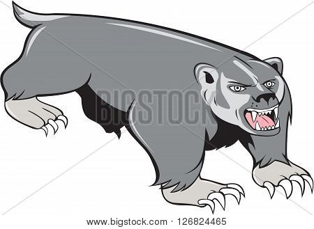 Illustration of a badger pouncing viewed from front set on isolated white background done in cartoon style.