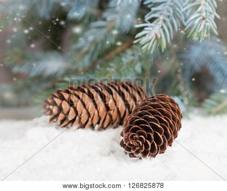 Fir cones lie on snow under fir sprinkled with snow
