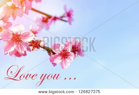 Caption of the word Love on the background of beautiful flowers. Inscription I love you. Beautiful background of flowers. Valentine's Day. Honeymoon.