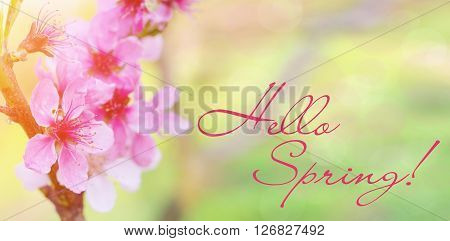 Blossom tree over nature background/ Spring flowers. Inscription word Hello Spring against the backdrop of beautiful flowers. Beautiful spring background of flowers. Easter.