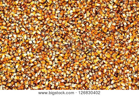 Bulk of yellow a corn grains textur