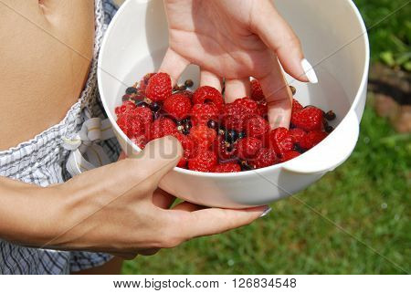 woman hand holding white bowl with raspberries and black currants