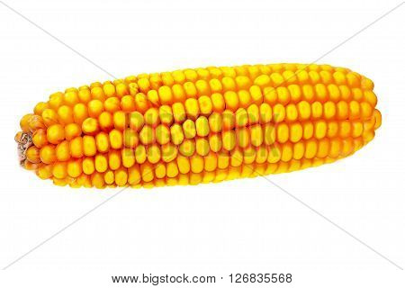 old yellow corn on white background with graing