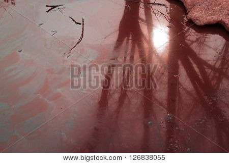 Oil Spill On Water With Tree Shadow