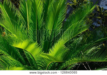 Closeup of fern with sunlight dappling the fronds