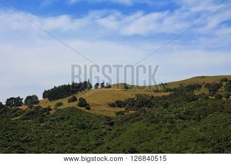 Green hill in New Zealand. Nature background. Landscape on the Banks Peninsula.