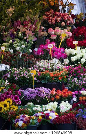Flowers for sale at a flower market