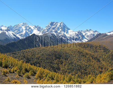 Baimang Snow Mountain Nature Reserve Diqing Yunnan China