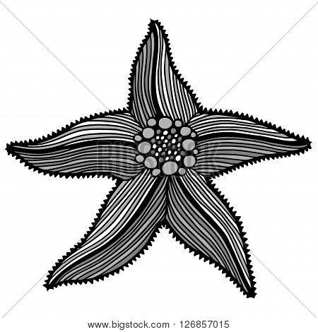 Black contour starfish illustration. Black Ink art work. Hand Drawn marine illustration. Vector nautical illustration. Ink drawing sea stars