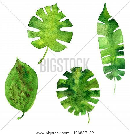 set of watercolor green  leaves of palm tree, exotic leaves, hand drawn design elements