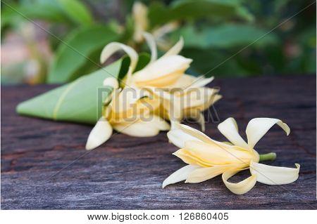 Close Up White Champaka On Wood Background