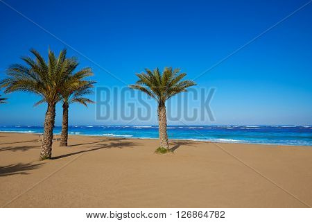 Denia beach Las Marinas with palm trees in Mediterranean Alicante of Spain