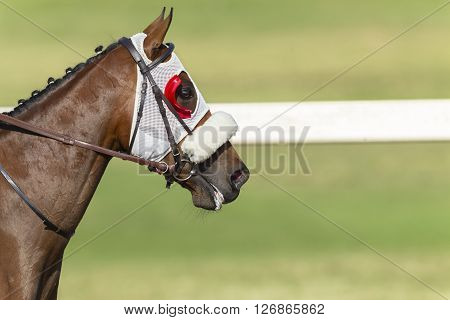 Horse Racing Head Blinkers