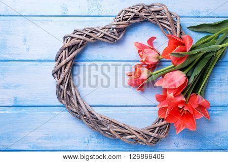 Decorative heart and aromatic spring tulips flowers on blue painted wooden background. Selective focus.