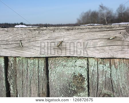 Old wooden fence from boards closeup with snow on top and winter trees in the background