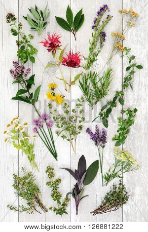 Fresh herb selection used in natural alternative medicine and also for culinary purposes over distressed white wooden background.