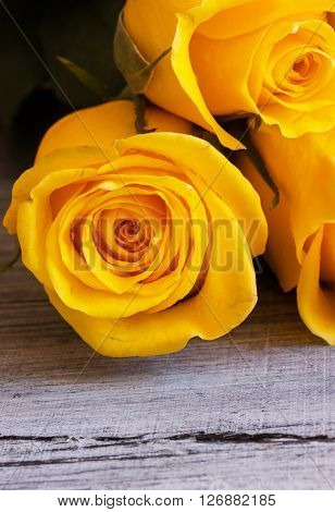 A bunch of yellow roses close up view