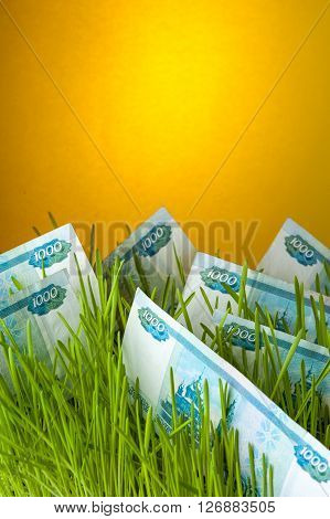 Ruble bills growing in green grass. Appreciation of russian currency. Financial concept.